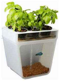 Home Aquaponics Garden - eclectic - plants - other metro - Back to the Roots