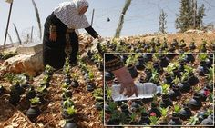 Palestinian gardener uses spent tear gas canisters as Plant Pots