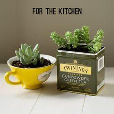 DIY terrarium / Des succulentes dans la cuisine