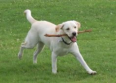 Denver - Not sure where to take your furry friend?  Here are three reviews of local dog parks.