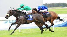 Raydara (IRE) 2012 Dkb.f. (Rock Of Gibraltar (IRE)-Raydiya (IRE)  by Marju (IRE) 1st Debutante S (IRE-G2,7f,Curragh)