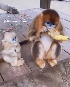 Here ya' go, kid. 😍 video memes passive aggressive Here ya' go, kid. Cute Funny Animals, Cute Baby Animals, Animals And Pets, Funny Owls, Pictures Of Cute Animals, Funny Monkeys, Amazing Animal Pictures, Cute Creatures, Beautiful Creatures