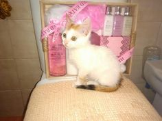 EBBA - Gato adoptado - AsoKa el Grande