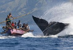 Traditional Whale Hunters in Lamalera, Nusa Tengara, Indonesia Whale Art, East Indies, Extinct Animals, Deep Blue Sea, Southeast Asia, Cool Photos, Tourism, Hunting, Boat