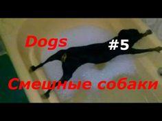 Funny dogs  Смешные собаки -  #dog #funnydogs #puppy #doglover #animals #pet #cute #pets #animales #tagsforlikes Stop Your Dog's Behavior Problems! Click HERE to learn how! Funny dogs  Смешные собаки Смешная видео подборка приколов про собак. Прикольные смешные животные. Смотрим видео и набираемся позитивом.... - #Dogs