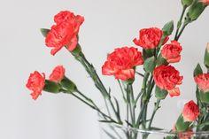 Orange Carnations     @ Shhh, it's a secret! -blog