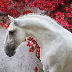 Ekaterina Druz Equine Photography - Yahoo Search Results Yahoo Image Search Results