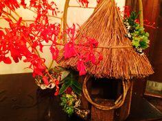 Casa de passarinho com suculentas