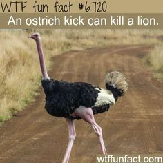 WTF Facts : funny, interesting & weird facts: