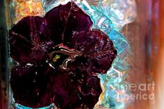 Petunia Metal Print featuring the photograph Abstract by Camelia C Aluminium Sheet, Got Print, Any Images, Your Image, High Gloss, Fine Art America, Art Pieces, My Arts