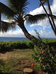 palm trees honolulu hi favorite places spaces pinterest