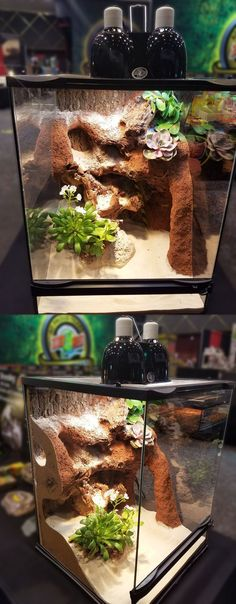 """DIY this terrarium with Excavator clay, an 18""""x18""""x24"""" Zoo Med Terrarium, ReptiSand, and your favorite choice of succulents. This setup is great for a variety of small desert species, as adding excavator creates more surface area for your pet to enjoy."""