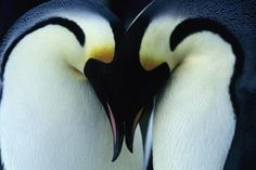 36 Non-Religious Wedding Readings That Show Off Your Literary Side - Your Personal Penguin Penguin Day, Penguin Love, Penguin Quotes, Penguin Facts, Penguin Awareness Day, March Of The Penguins, Penguin Pictures, Wedding Readings, Wedding Poems