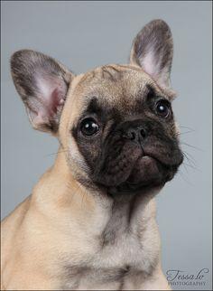 French bulldog... i want one so very badly!