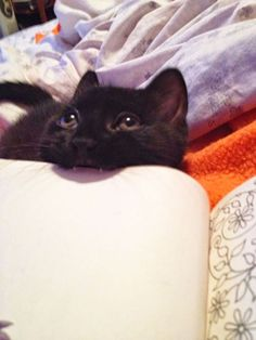 Random Lol cat pictures (01:04:08 AM, Tuesday 24, March 2015 PDT) – 15 pics