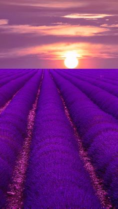 Sunset on Lavender Fields - Provence, France.Are Positively Stunning! Beautiful Sunset, Beautiful World, Beautiful Places, Beautiful Pictures, Simply Beautiful, Lavender Fields, Lavander, Belle Photo, Champs