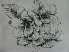 southern magnolia sketches - Google Search