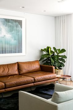 Leather sofa . Fiddle leaf fig