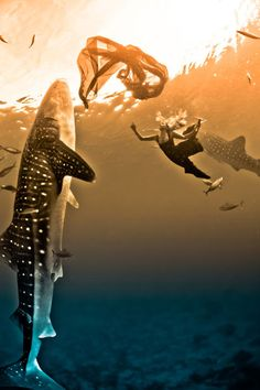 Models swim with whale sharks in an underwater fashion shoot.