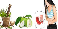 Manfaat daun jambu biji untuk maag