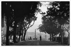 Row of trees, Gianicolo, Rome