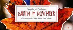 Garten November Tipps