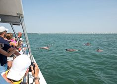 Dolphin Tours in Myr