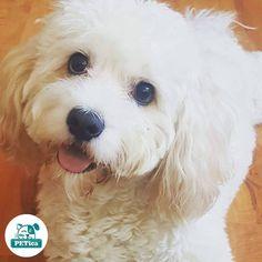 😍😍😍 @ffhhp5 #PETica ______________________________________________________________  #dog #dogs #dogstagram #dogoftheday #dogofinstagram #dogofinsta #instadog #doggie #doggy #puppy #pupstagram #pet #pets #petstagram #petoftheday #photooftheday #instaphoto #instadaily #picoftheday #cute #lovedog #dogplay #cutedog #doglover #doglovers #lovedog #dog🐶  #dogsofinstaworld #puppie