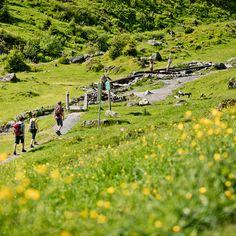 Auf und abseits der Pfade Pinzgauer, Dolores Park, Outdoor, Travel, Walking Routes, The Last Song, Hiking, Landscape, Summer