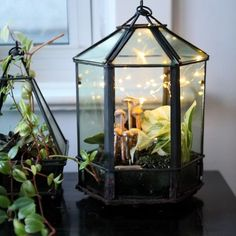 Plant Care: How to Grow Tropical Plants in Geometric Terrariums Geometric Terrarium Planting and Care Guide. Beautiful terrariums full of tropical plants. Geometric Terrarium Planting and Care Guide. Beautiful terrariums full of tropical plants. Terrarium Plants, Glass Terrarium, Terrarium Wedding, Wedding Plants, Enjoying The Small Things, How To Make Terrariums, House Plant Care, Growing Plants, Growing Gardens