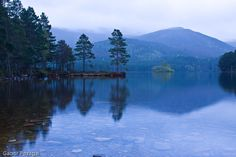 Misty morning by Loch Garten in the Cairngorms, Scotland Fort Augustus, Inverness Shire, North Coast 500, Cairngorms, Brown Trout, What A Wonderful World, Fly Fishing, Wonders Of The World, Fine Art America