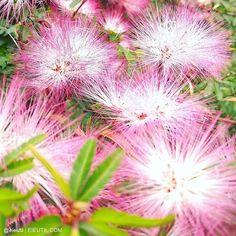Para comemorar o #OutubroRosa, uma linda flor de bom dia pra vocês! Acesse o site: http://outubrorosa.org.br/ e saiba mais sobre o trabalho desenvolvido pelo Instituto Neo Mama. #eiEutil