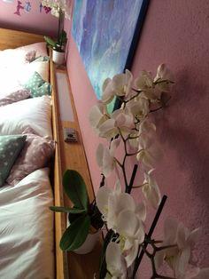 Familienbett co-sleeping Platz für fünf