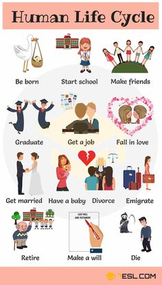 Human Life Cycle: Useful Stages of Life with Pictures - 7 E S L