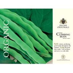 GW recommended Climbing Bean 'Helda' Bean Seeds - Thompson & Morgan