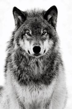 Wolf painting project