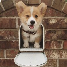 You have mail!
