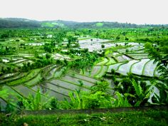 {been here, 2010} the rice terraces are such an amazing sight - Bali, Indonesia //JN