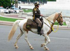 Pinto Mounted patrol horse. Mounted patrol officers are volunteers.
