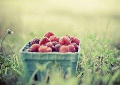 berries. berries. berries. [summer]