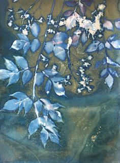 gallery of cyanotype prints by Linda Clark Johnson — linda clark johnson Sun Prints, Alternative Photography, Etching Prints, Cyanotype, Botanical Flowers, Paint Designs, Surface Pattern, Printmaking, Printing On Fabric