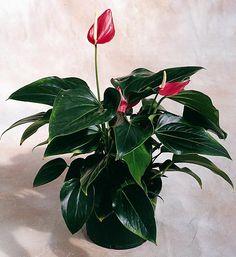 Variegated Plants, Plant Hangers, Plant Stands, Houseplants, Hibiscus, Indoor Plants, Gemini, Orchids, Plant Leaves