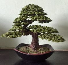 "Bonsai is not the only hobby for many bonsai people. These artists create amazing wire tree sculpture, in addition to working with live bonsai trees. Some are actually ""growing"" in bonsai pots."