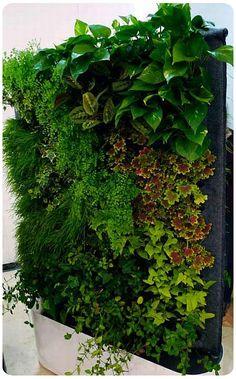 vertical gardens- love for an outdoor space, would be neat to have lots of herbs