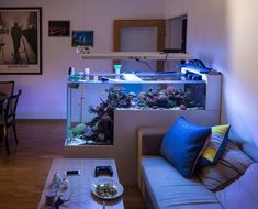 Aquariums are great because of their health benefits and attractive appearance in your home. Provided that you keep your tank clean, there is no way a freshwater aquarium can be an ugly piece of home décor, Saltwater Aquarium Setup, Coral Reef Aquarium, Saltwater Fish Tanks, Aquarium Design, Marine Aquarium, Aquarium Fish Tank, Fish Tank Design, Cool Fish Tanks, Amazing Aquariums