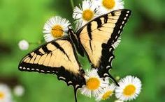 Image result for butterfly pictures