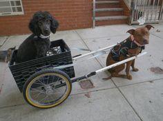 DIY dog cart