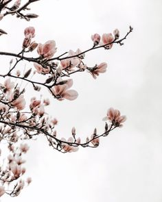 Cherry blossom, spring is in the air. Hello Weekend, Pretty Photos, Floral Crown, Flower Wall, Cherry Blossom, Wild Flowers, Wedding Bouquets, Bloom, Plant