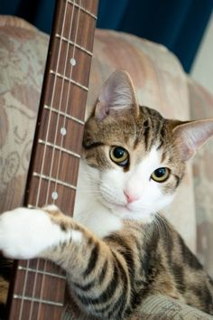 I'll play a tune for you if you have some cat treats!!!   By helena.