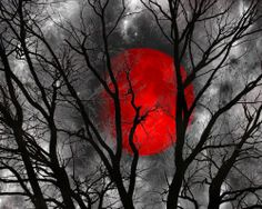"""Black White Yellow Moon Tree Wall Art Home Decor Matted Picture (Options) / color """"splash"""" Black White Red, Red And Grey, Black And White Pictures, White Art, Yellow Moon, Red Moon, Color Splash, Color Pop, Splash Photography"""
